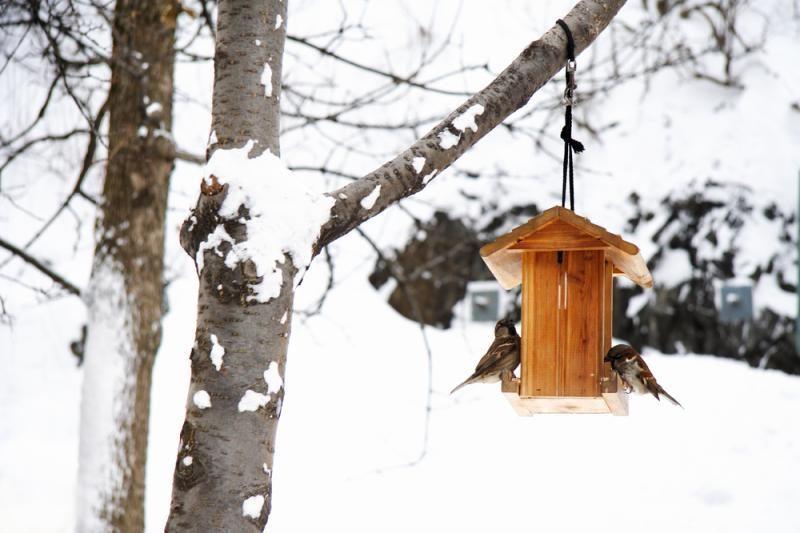 Ko labiau bijo paukščiai - sniego ar lietaus?