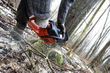 Klaipėdietis neteko medžių