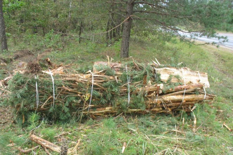 ES paramos lėšomis ugdys mišką anūkams