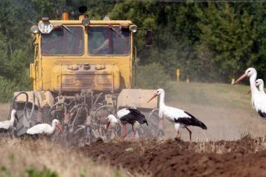 Draudikai tebeskaičiuoja ūkininkų nuostolius