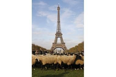 Eifelio bokštą užgrobė avys