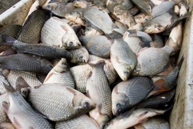 Žvejus nustebino žuvies paklausa