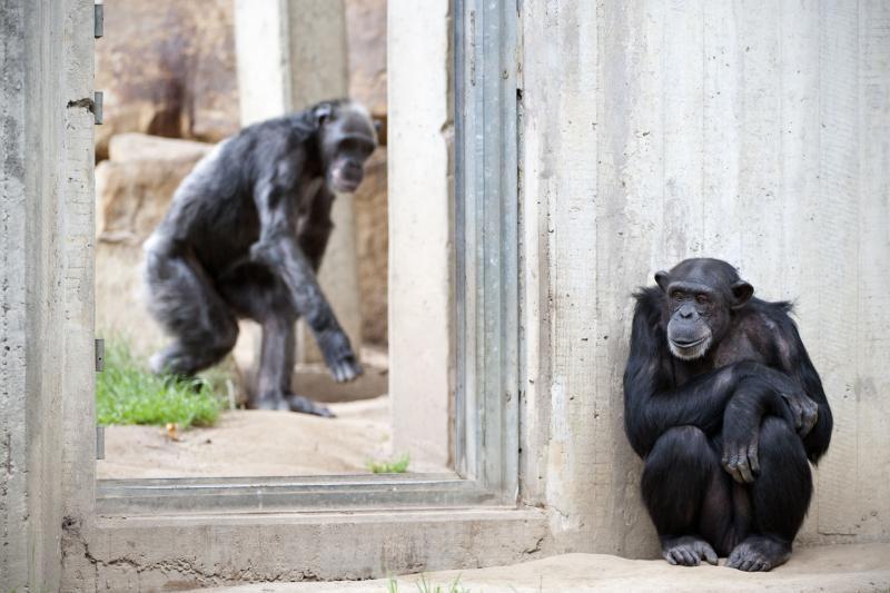 Genialumas egzistuoja ne tik tarp žmonių, bet ir gyvūnų pasaulyje