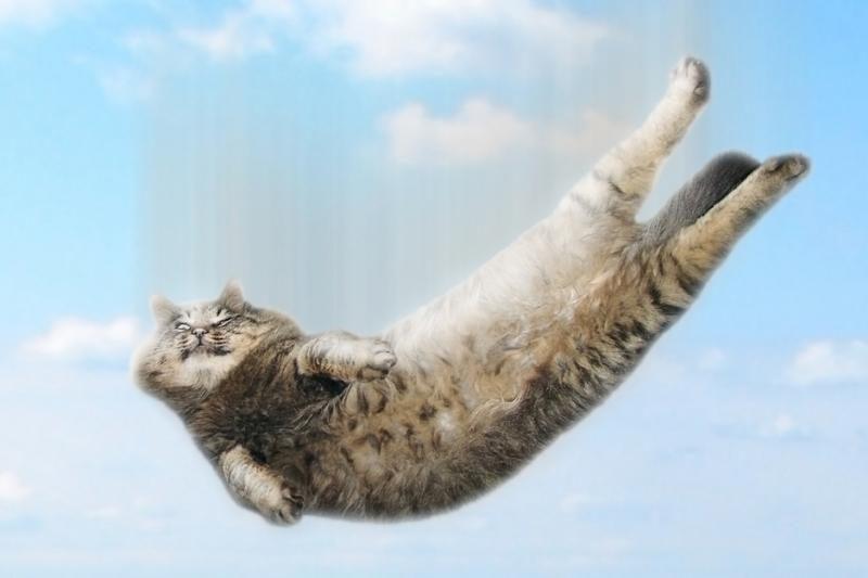 Kaip katės išgyvena kritimą iš didelio aukščio?