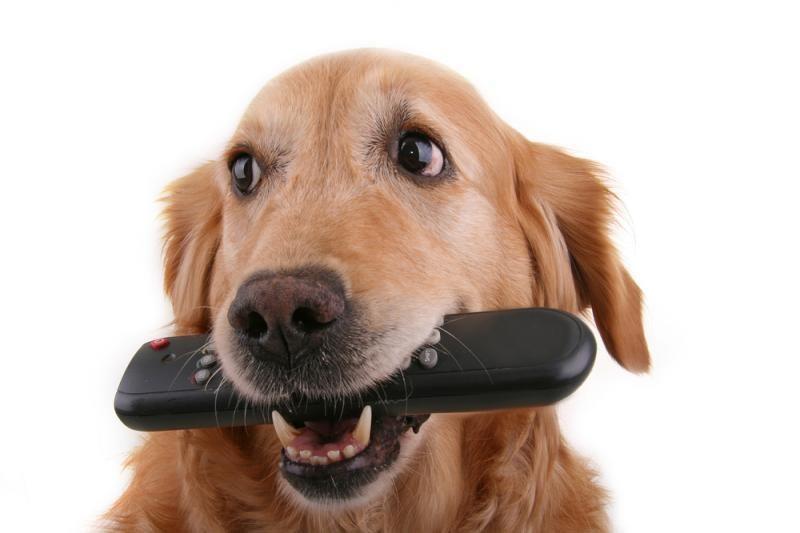 JAV televizijos kanalas šunims - jau eteryje