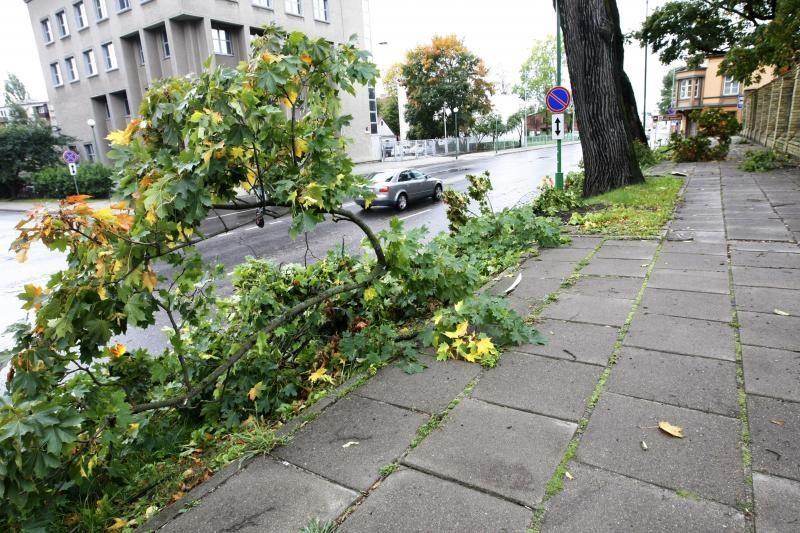 Vėjo padarinius Klaipėdoje tikimasi pašalinti artimiausiu metu