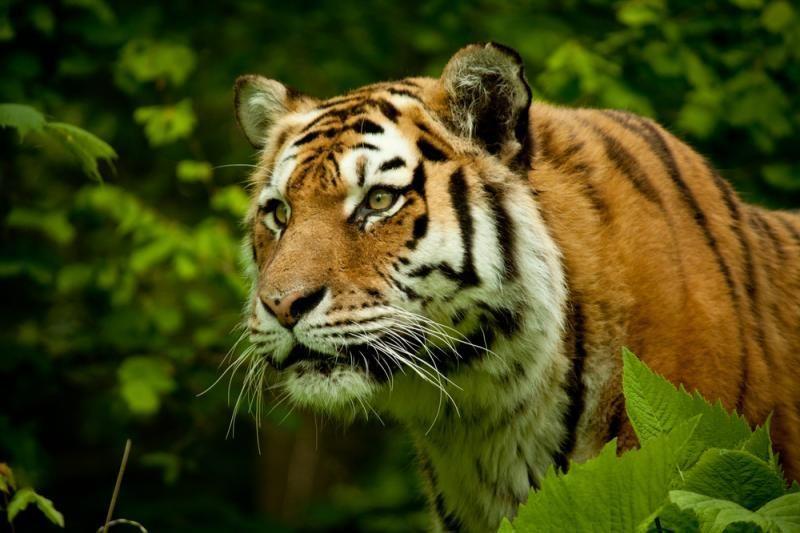 Zoologijos sodą legalizuoti trukdo popierizmas