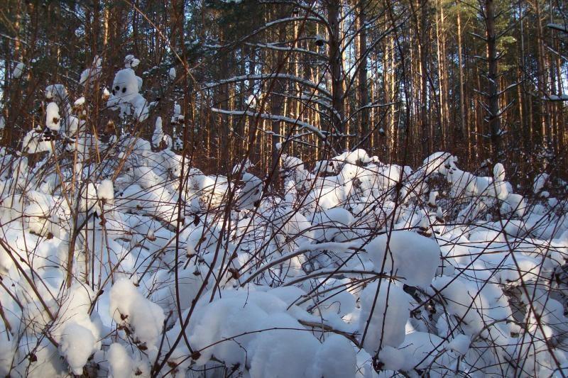 Nedidelius kritulius Lietuvoje keis smarkus snygis