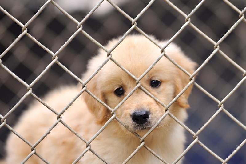 Gyvūnų augintinių veisėjams - nauji reikalavimai