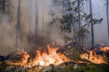 Šakių rajono valdžia uždraudė lankytis miškuose
