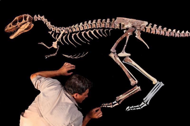 Net didžiausių dinozaurų smegenys buvo teniso kamuoliuko dydžio