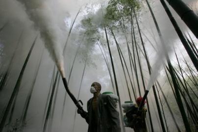 84 sunkvežimiai pesticidų atliekų iškeliaus į Vokietiją