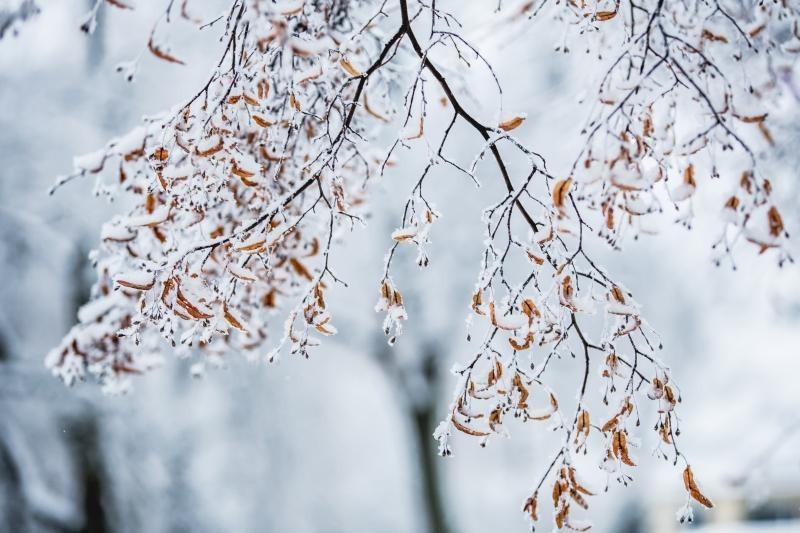 Sinoptikai: savaitės pradžioje - sniegas ir lijundra