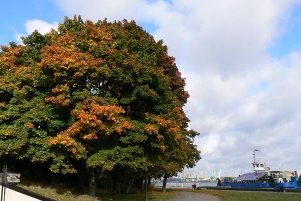 Savaitgalį – darganoti rudeniški orai