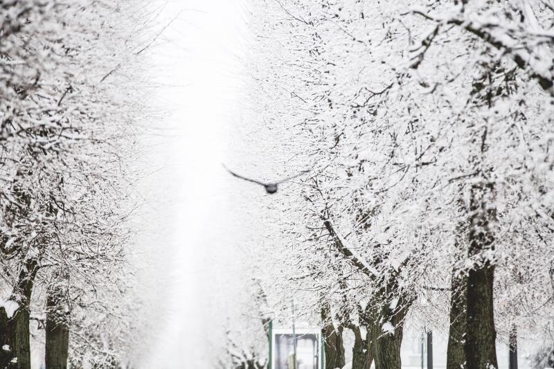 Savaitės pradžia turėtų būti su nedideliu šaltuku ir saulėta