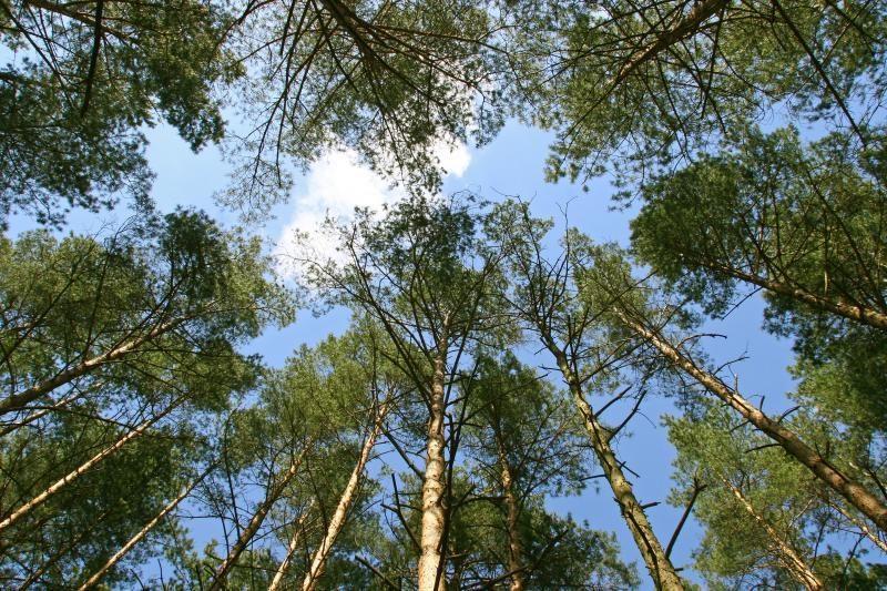 Lietuvos miškuose sumažėjo neteisėtų kirtimų