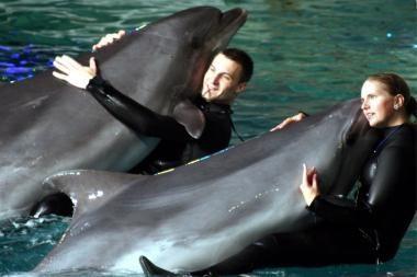 Delfinai vis dar laukia kelionės į Graikiją