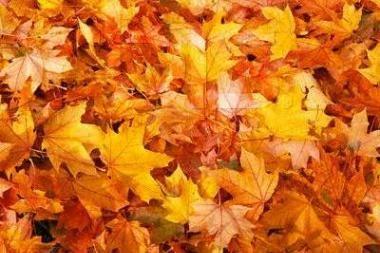 Literatūrinis koncertas rudeninėms nuotaikoms praskaidrinti