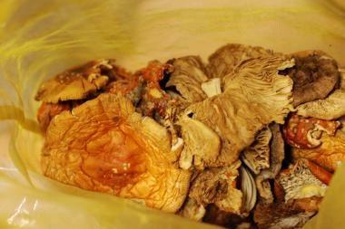 Etnobotanikos mėgėjas augino ir narkotines medžiagas