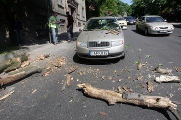 Važiuojantį automobilį apgadino nulūžusi medžio šaka
