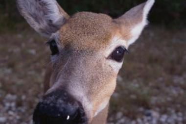 Gamtosaugininkai ragina gyventojus padėti gyvūnams peržiemoti