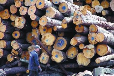 Purnuškėse - stambi medienos vagystė