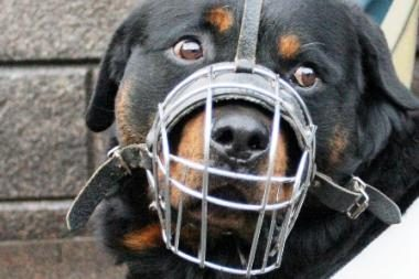 Prieš šunį – geležiniu strypu