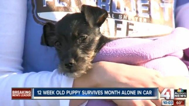 Šuniukas mėnesį išgyveno uždarytas mašinoje
