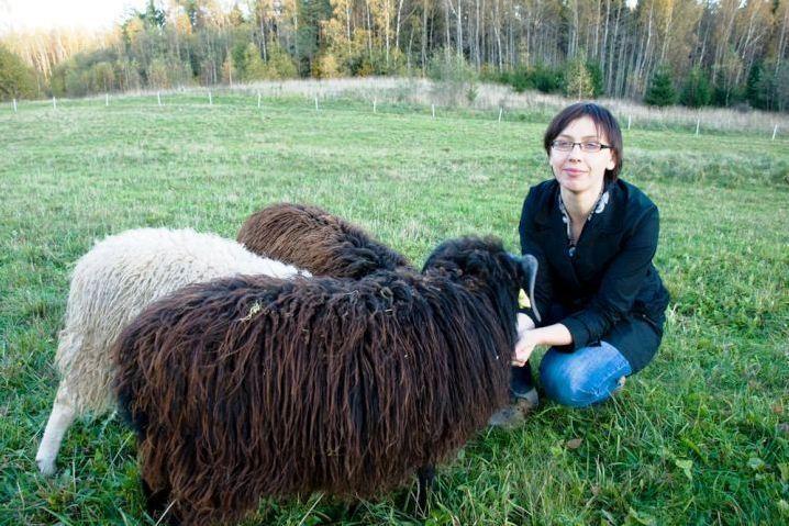 Ūkininkai siekia, kad škudžių aviys būtų pripažintos tautiniu paveldu
