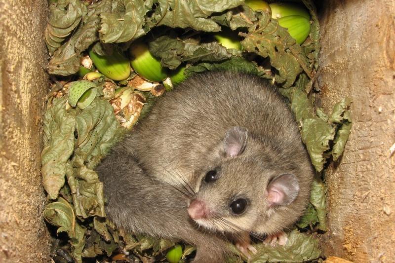 Neries regioninio parko perlas – Dūkštų ąžuolynas – bus išsaugotas