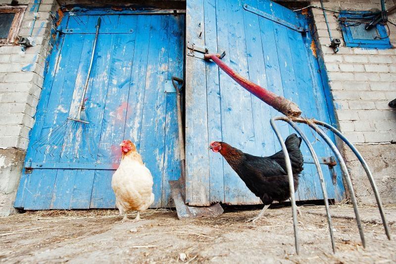 Miestiečiai veržiasi į kaimą: darbas už ekologišką stogą ir maistą