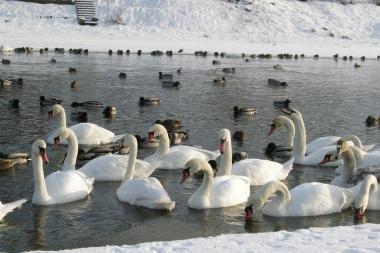 Orai: į Lietuvą ateina žiema su speigais