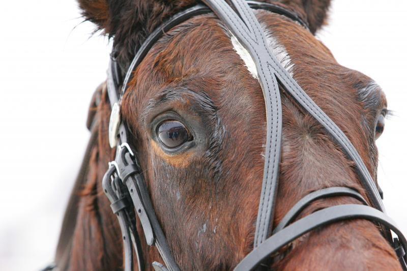 Ūkininkas nepakenčiamose sąlygose laikė arklius