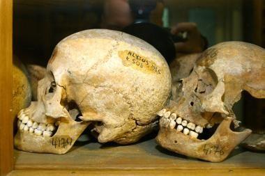 Muziejaus eksponatai – G.Galilėjaus dantis, nykštys ir dar vienas pirštas