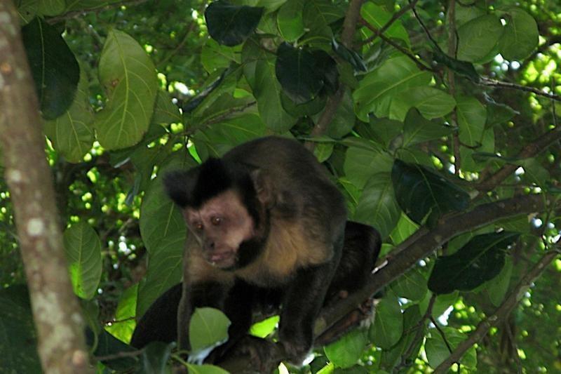 Gamtininkų centre Vilniuje žiauriai nužudytas beždžioniukas Čitas