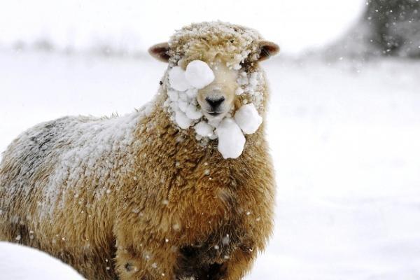 Nukritusi nuo uolos nugaišo seniausia avis pasaulyje