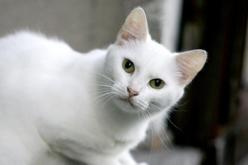 Bendrovės direktorius ant durų rado negyvą katiną
