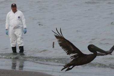Meksikos įlankos pakrantės gyventojai jau mato artėjantį pragarą