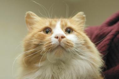 Vilniuje iš 9-ojo aukšto išmestas katinas neišgyveno