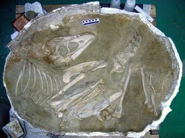 Archeologų laimikis – 70 mln. metų amžiaus dinozauras (nuotr.)
