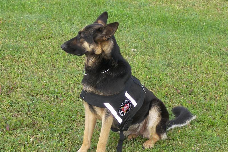 Pasieniečių šuo pažeidėją sekė tris kilometrus