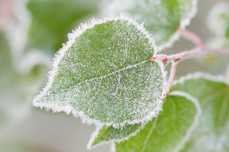 Pirmoji Naujųjų metų diena bus sausa ir šaltoka