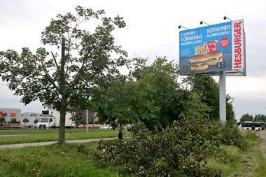 Dėl mėsainių reklamos Panevėžyje nupjauti medžiai