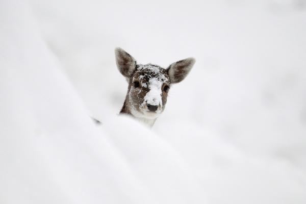 Ar iš tiesų eskimų kalboje yra 50 sniego pavadinimų?