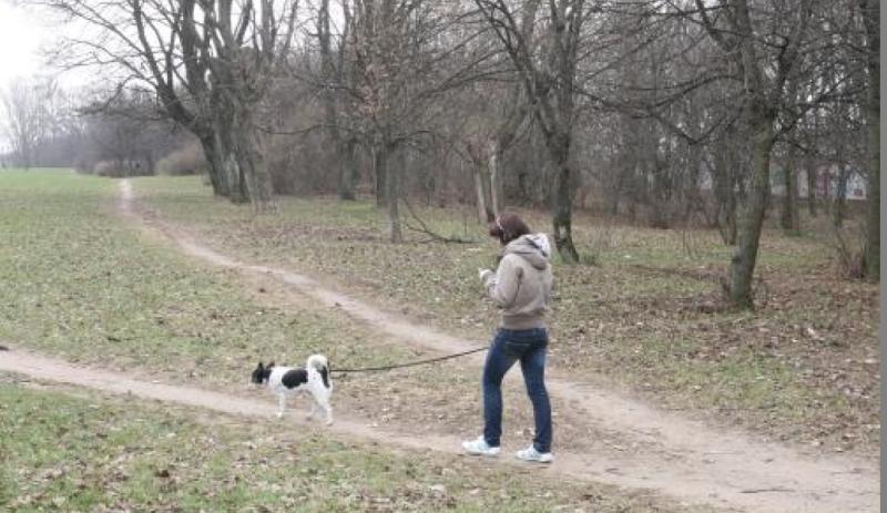 Kapinėse – šunų  vedžiojimo  aikštelė