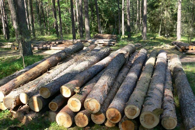 Miškuose pūva biokuras – beveik pusė tiekiamos šilumos vertės