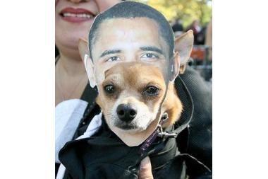 Prieš Heloviną – šunų kostiumų paradas