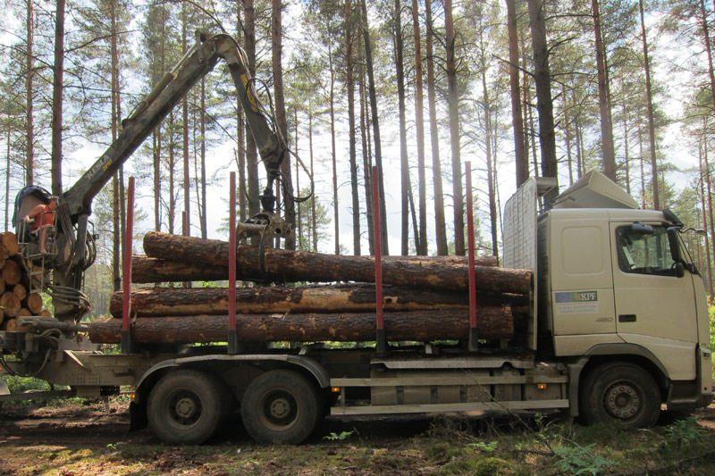 Parama miškininkystės projektams skiriama pagal atnaujintas taisykles