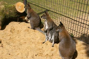 Egzotiškų gyvūnų sulaukė Lietuvos zoologijos sodas