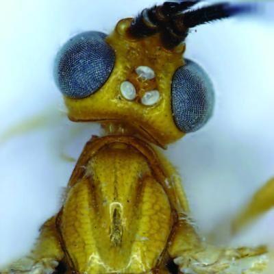 Naujai vabzdžių rūšiai – aktorės U.Thurman suvaidinto personažo vardas